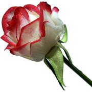 گل مصنوعی S442B