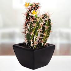 گل مصنوعی کاکتوس با گلدان مدل 40743