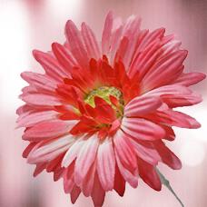 گل مصنوعی 27021F